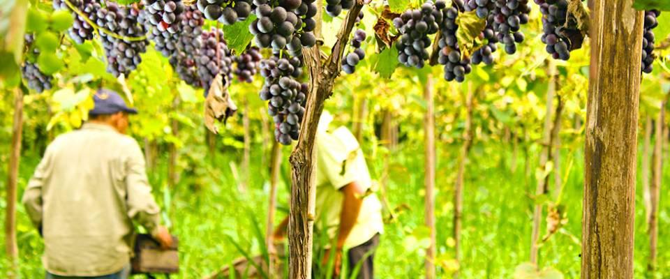 La Fiesta del Vino de la Costa continúa con un conversatorio con elaboradores de vinos caseros